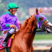 California Chrome - Royal Ascot
