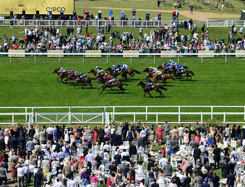 Royal Ascot Hospitality - Private Box - Ascot Racecourse